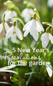 New years resolutions for your garden